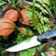 Нож грибника: правила выбора и особенности использования