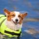 Спасательные жилеты для собаки
